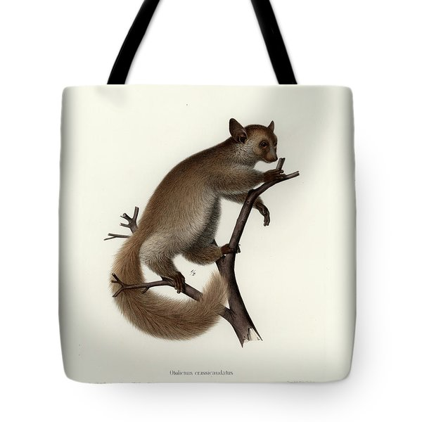 Brown Greater Galago Or Thick-tailed Bushbaby Tote Bag