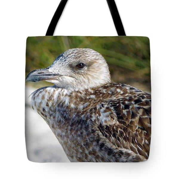 Brown Gull At Wiggins Pass Tote Bag