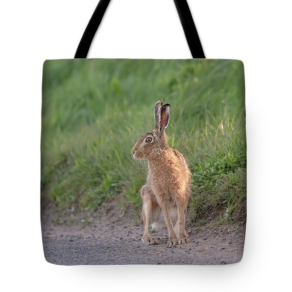 Brown Hare Listening Tote Bag