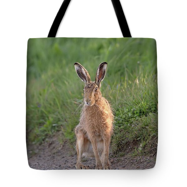 Brown Hare Sat On Track At Dawn Tote Bag