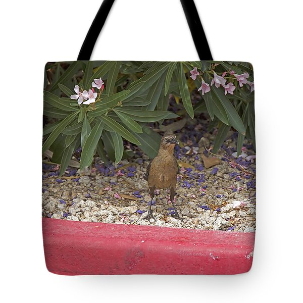 Tote Bag featuring the photograph Brown Headed Cowbird by Anne Rodkin