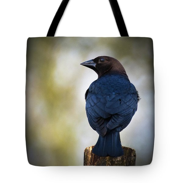 Brown-headed Cowbird Tote Bag
