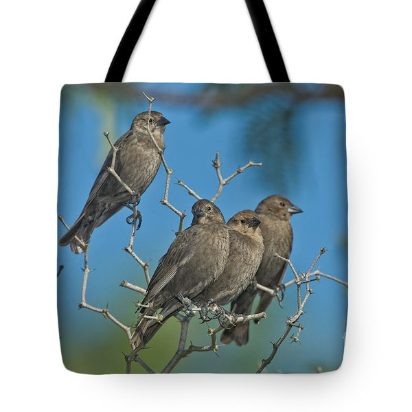 Brown-headed Cowbirds Tote Bag