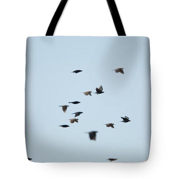 Brown-headed Cowbirds In Eastern Tote Bag