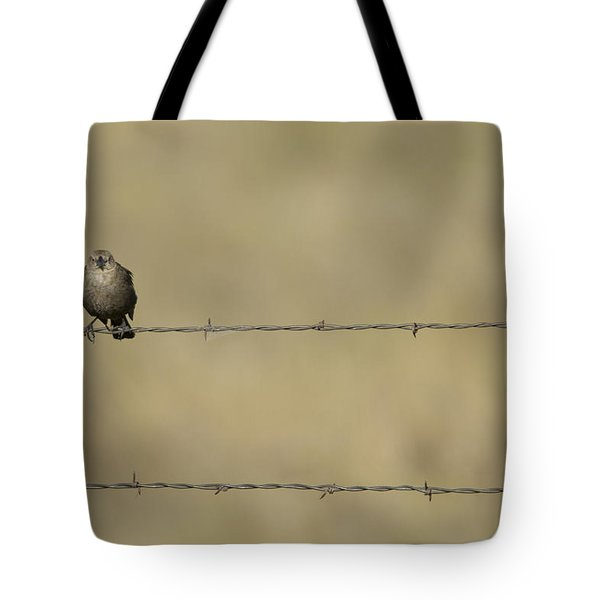 Brown-headed Cowbirds Perch On A Barbed Tote Bag