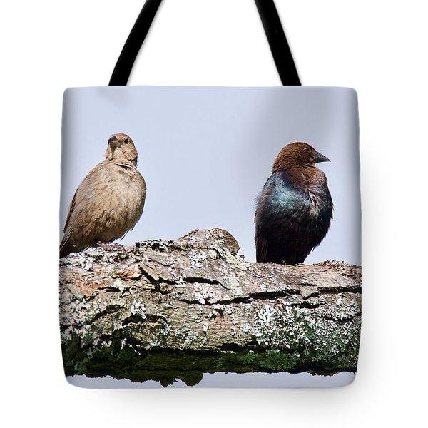Brown Headed Cowbirds Sitting In A Tree Tote Bag