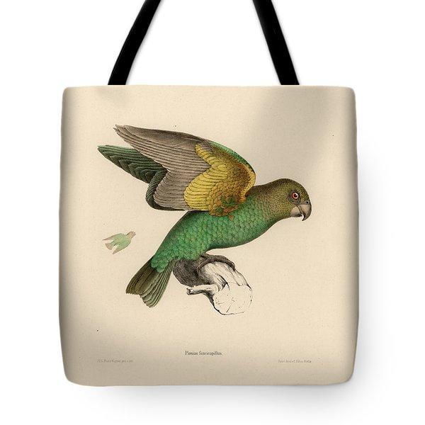 Brown-headed Parrot, Piocephalus Cryptoxanthus Tote Bag