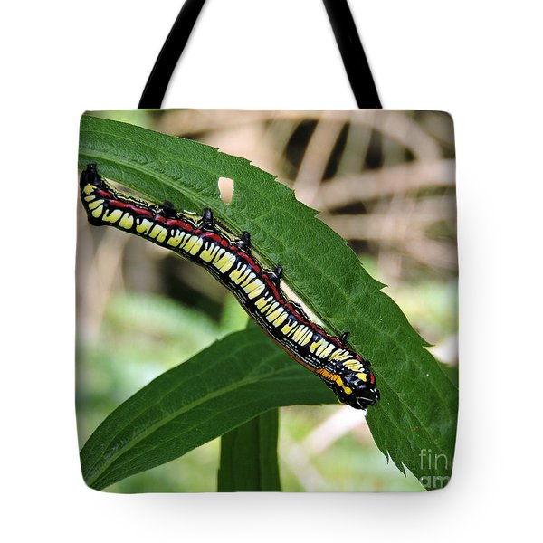 Brown Hooded Owlet Moth Larva  Tote Bag