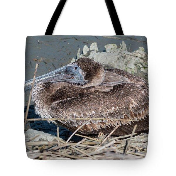 Brown Pelican 3 March 2018 Tote Bag