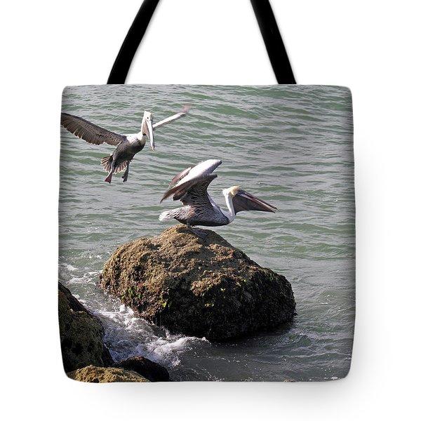 Brown Pelicans In Florida  Tote Bag by Allan  Hughes
