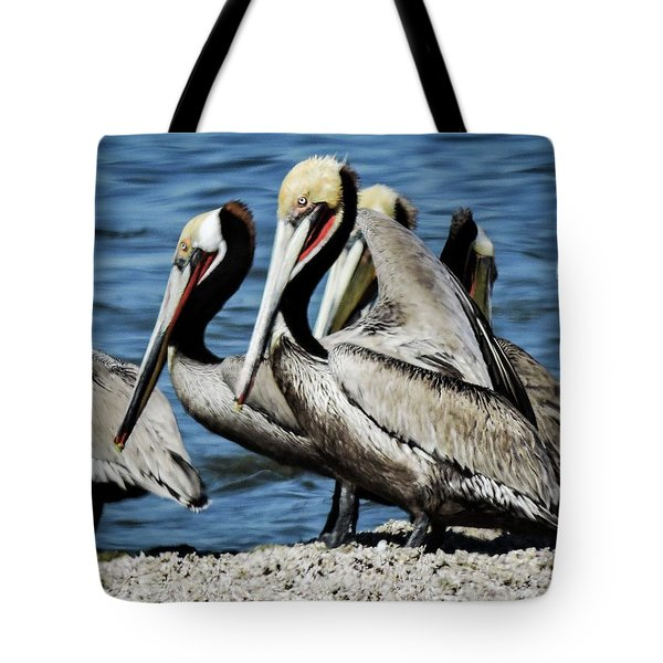 Brown Pelicans Preening Tote Bag