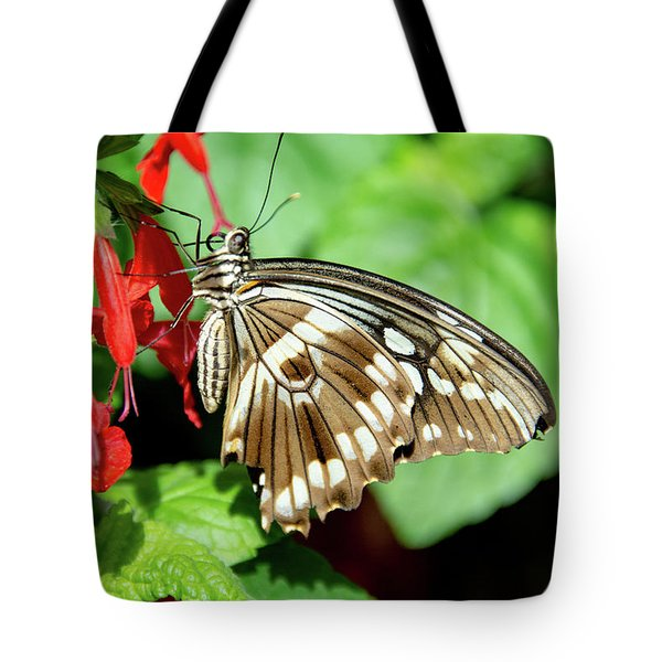 Brown Swallowtail Butterfly Tote Bag