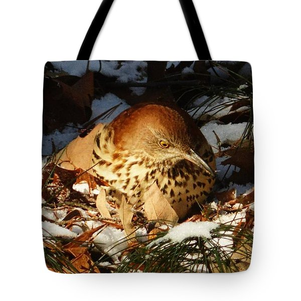 Brown Thrasher Closeup Tote Bag