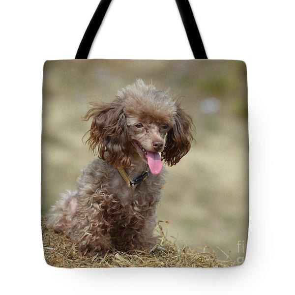 Brown Toy Poodle On Bail Of Hay Tote Bag