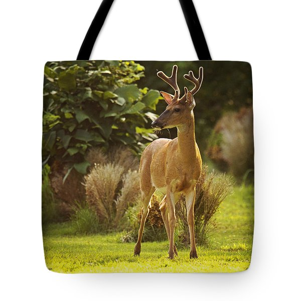 Tote Bag featuring the photograph Buck by Angel Cher