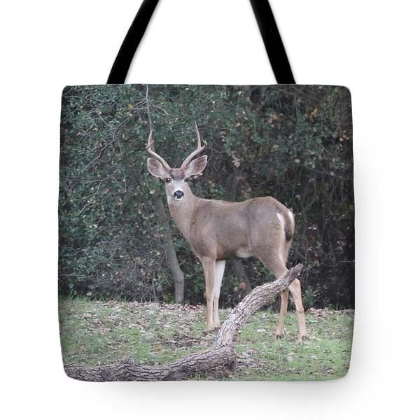 Buck  Tote Bag by Christy Pooschke