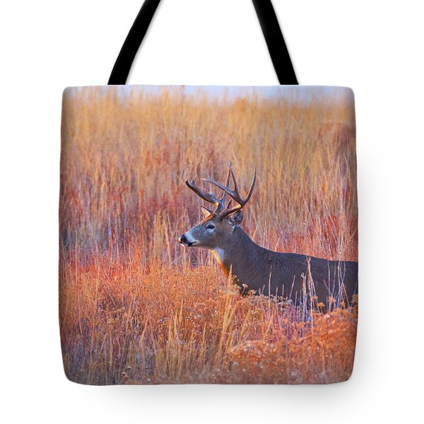 Buck Deer In Morning Sunlight Tote Bag