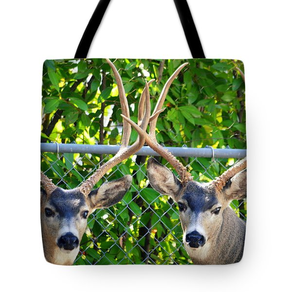 Buck Eyes Tote Bag