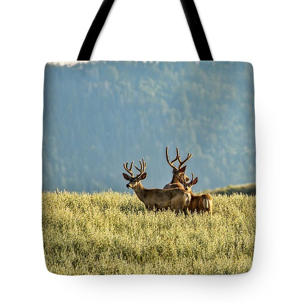 Buck Mule Deer In Velvet Tote Bag by Daniel Hebard