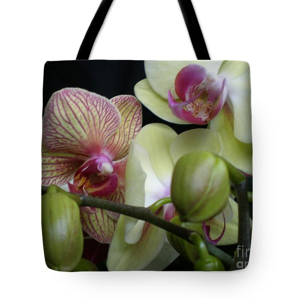 Budding Orchids  Tote Bag