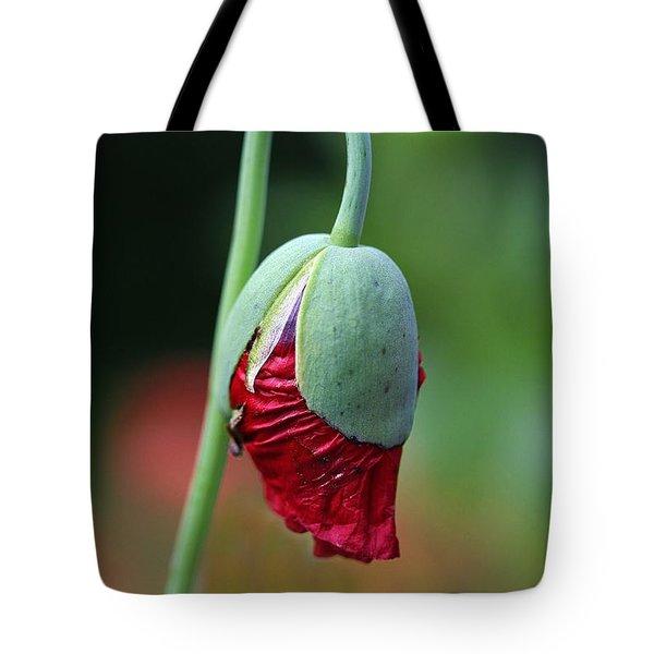 Budding Poppy Tote Bag