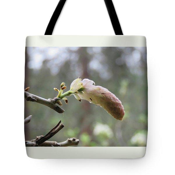 Budding Wisteria - Springtime In The Garden - Tote Bag by Brooks Garten Hauschild