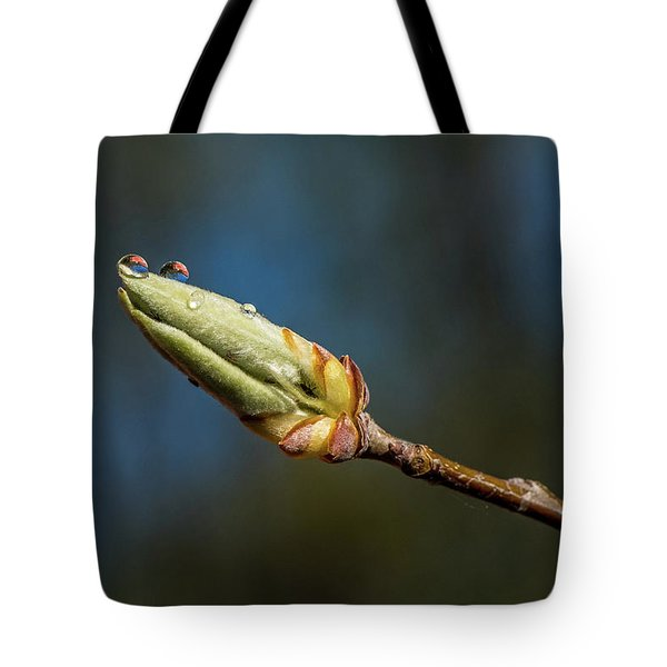Tote Bag featuring the photograph Buds With Water Drops by Paul Freidlund