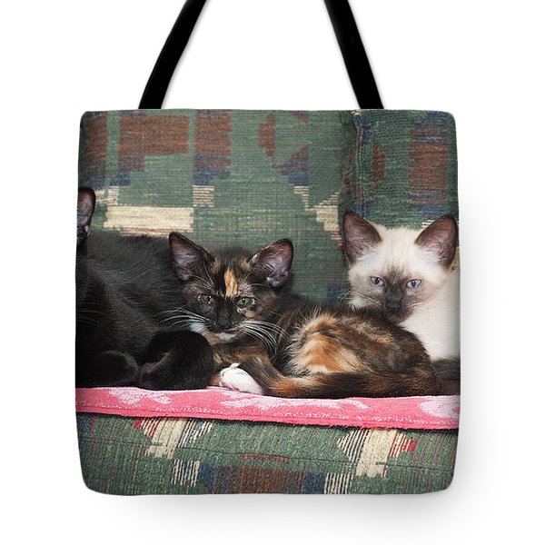 Tote Bag featuring the photograph Bugzy And His Babies by Karen Slagle