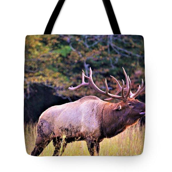 Bull Calling His Herd Tote Bag