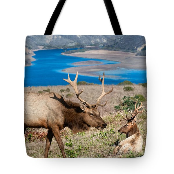 Bull Elk Above Tomales Bay Tote Bag
