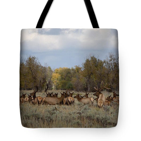 Bull Elk And Harem Tote Bag by Sandy Molinaro