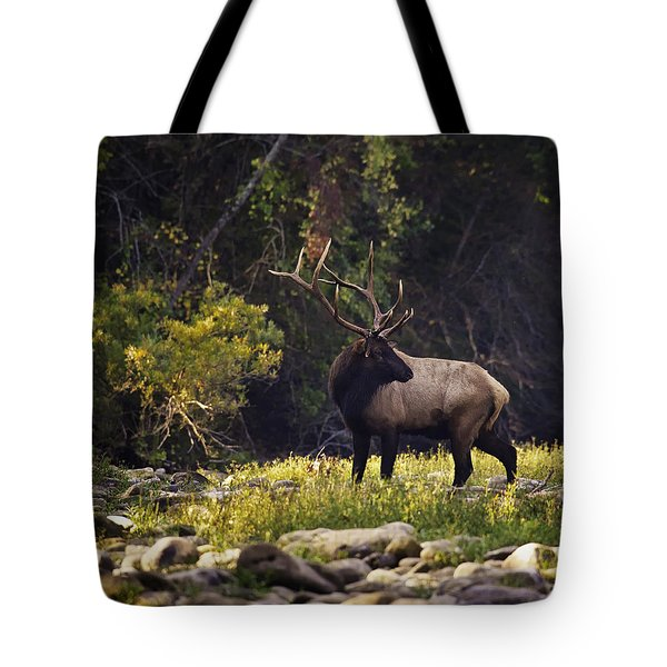 Bull Elk Checking For Competition Tote Bag
