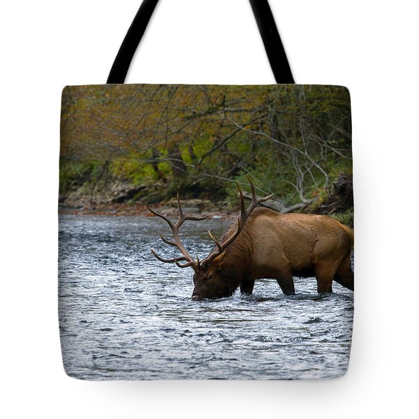 Bull Elk Crossing The River Tote Bag