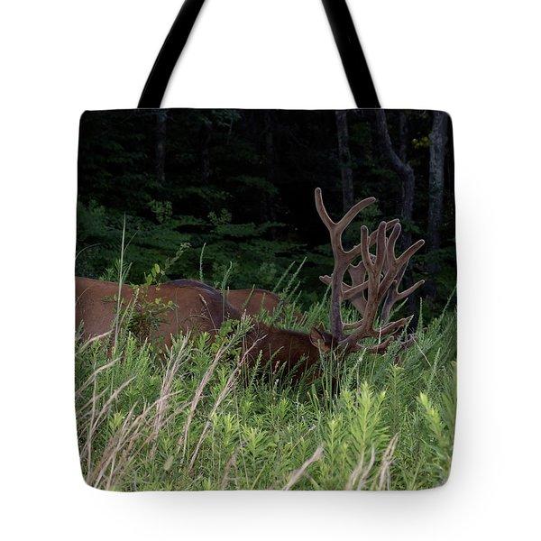 Bull Elk Grazing Tote Bag
