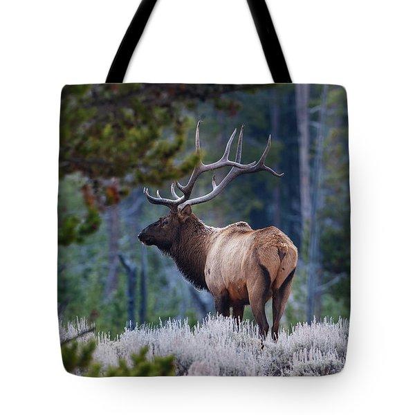 Bull Elk In Forest Tote Bag