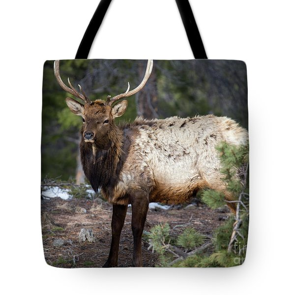 Bull Elk In The Rockies Tote Bag