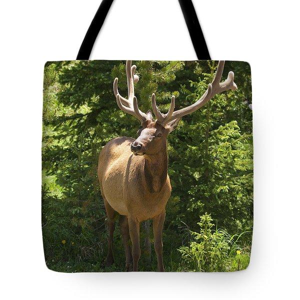 Bull Elk In Velvet Tote Bag