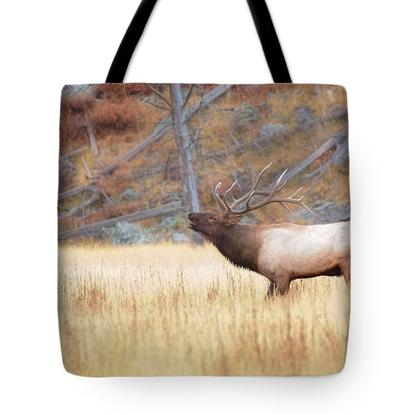Bull Elk Tote Bag by Kelly Marquardt