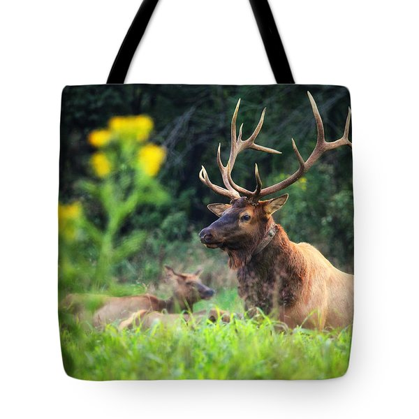 Tote Bag featuring the photograph Bull Elk Rutting In Boxley Valley by Michael Dougherty