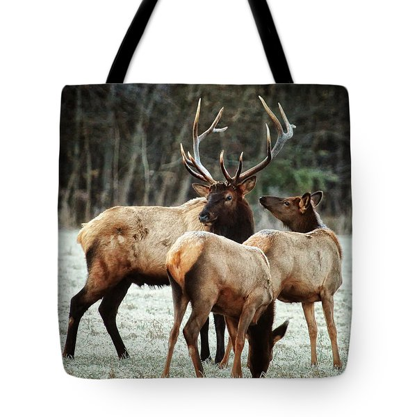 Bull Elk With Cows In The Late Rut Tote Bag