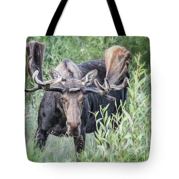 Bull Moose, Grand Tetons Tote Bag