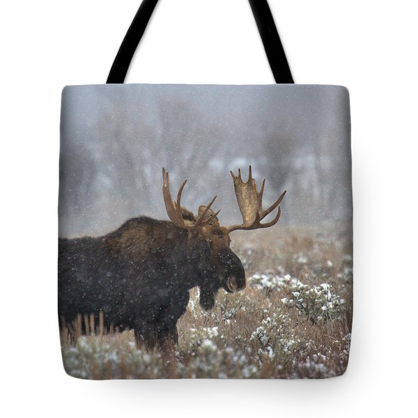 Tote Bag featuring the photograph Bull Moose In The Fog by Adam Jewell