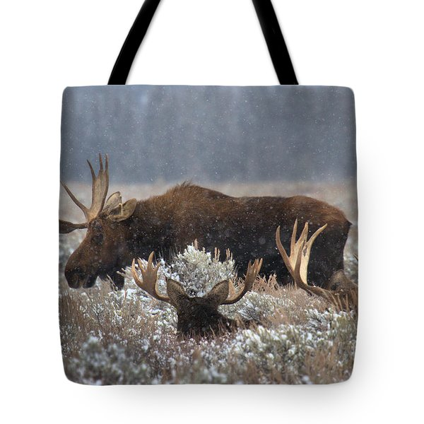 Tote Bag featuring the photograph Bull Moose In The Snowy Meadow by Adam Jewell