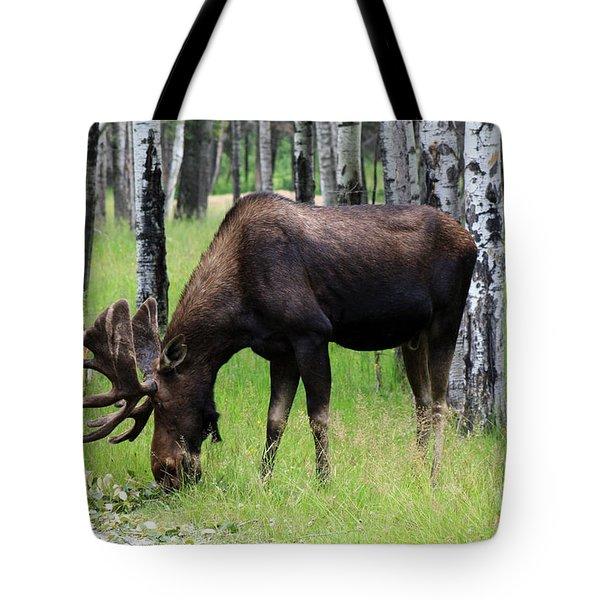 Bull Moose In The Woods  Tote Bag
