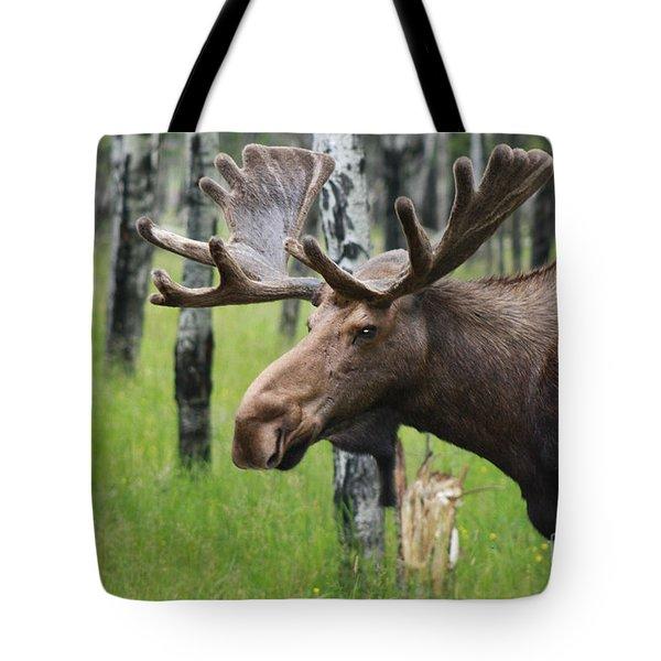 Bull Moose Portrait Tote Bag