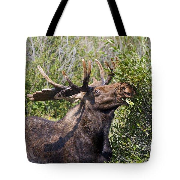 Bull Moose Tote Bag by Teresa Zieba