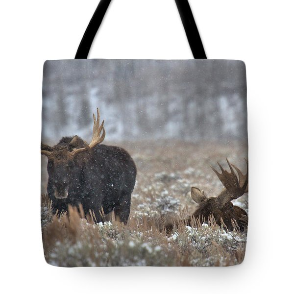 Tote Bag featuring the photograph Bull Moose Winter Wandering by Adam Jewell