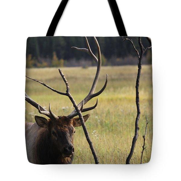 Bullelk2 Tote Bag