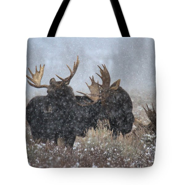Tote Bag featuring the photograph Bulls In The Snow by Adam Jewell