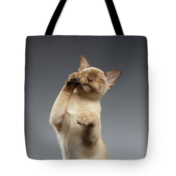 Burma Cat Paws Snout Covers On Gray Tote Bag